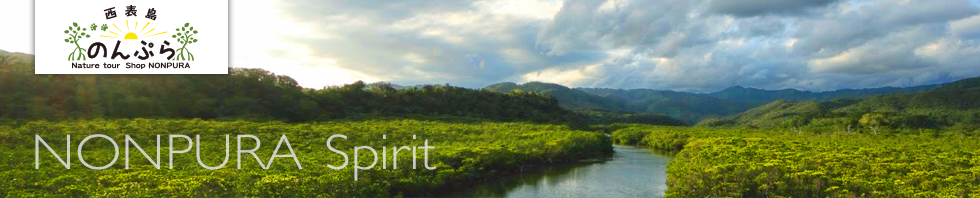 西表島カヌーツアー運営サイトのんぷら風景1
