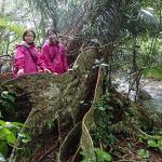 しとしと雨のジャングル